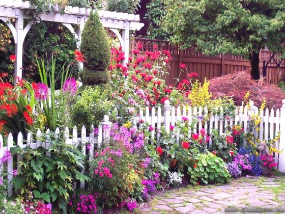 full-color-flowers-summer-garden_121748